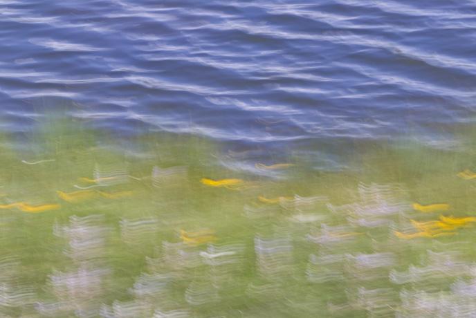 Summer's Monet