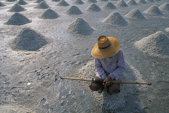 Thailand Salt Harvest
